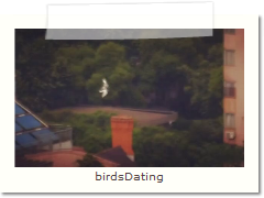 birdsDating