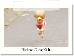 Riding DingXI lu
